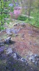 Näkymä ylhäältä kirsikkapuiden kukinnan aikaan