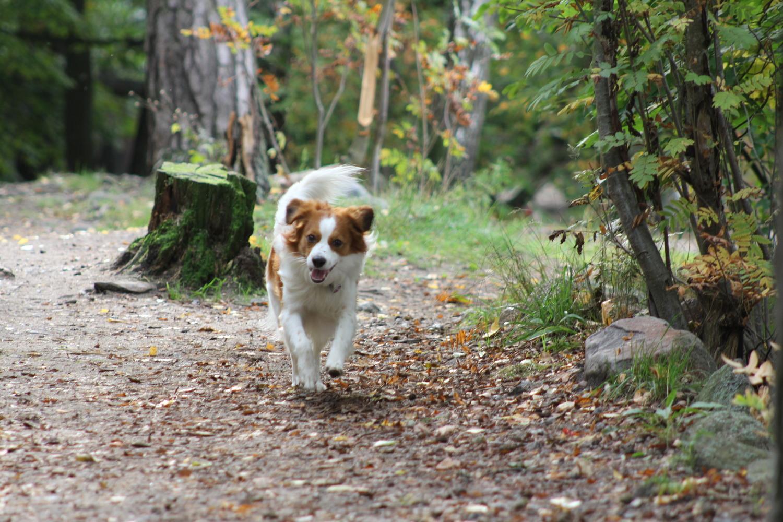 Rajasaaren koirapuiston kunnostus