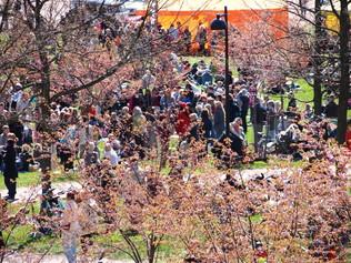 Näkymää mäen alaosista kirsikkapuiston suuntaan hanamin aikana
