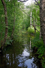 Mätäjoki Marttilan kohdalla, heinäkuussa 2018