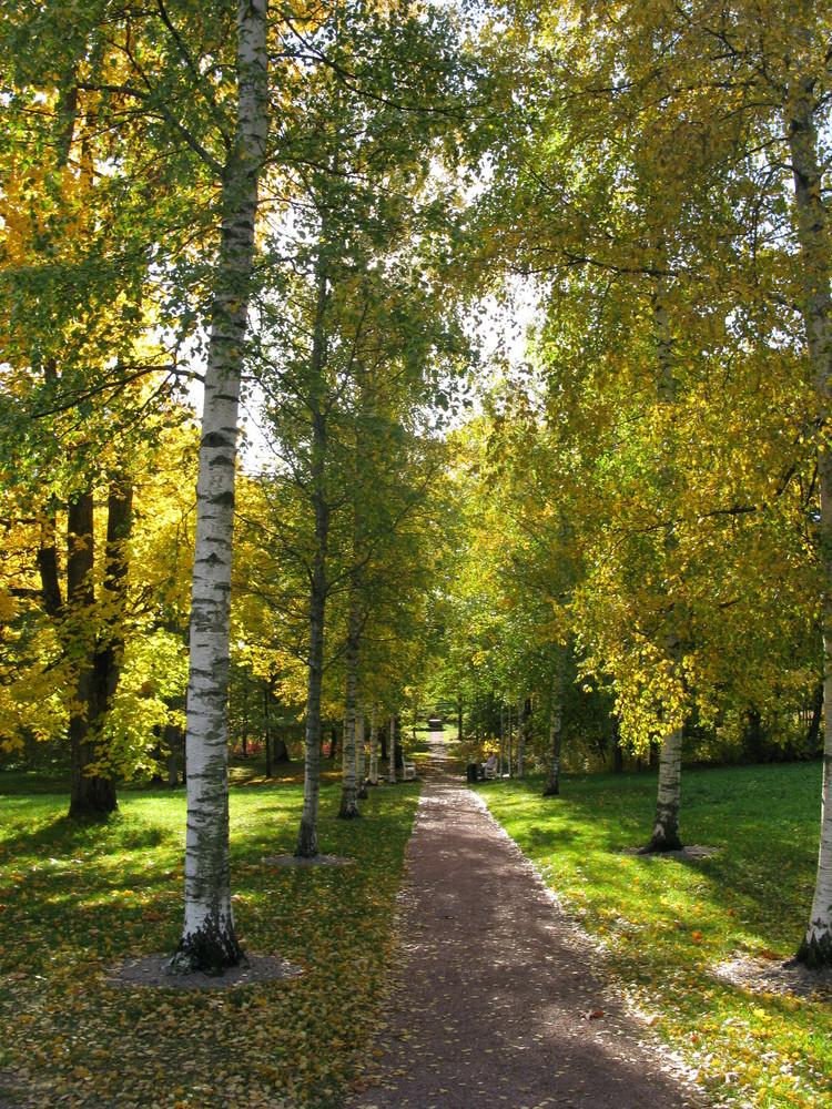 Luontoelämyspolku Annalan tammimetsään