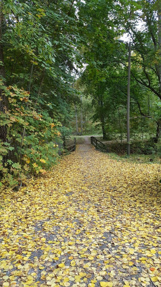 Humalniemen venekerholle johtavan puistoalueen (räme) kunnostaminen ja puiden karsinta