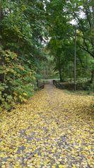 Puistoalueen ojan yli johtava vanha silta syksyllä