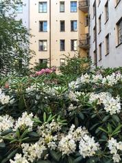 Runsasta kaupunkiluontoa Töölössä Sonckin korttelissa