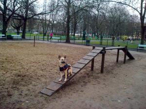 Koirapuistojen laajentaminen ja jakaminen pienille ja isoille koirille sekä eteiset