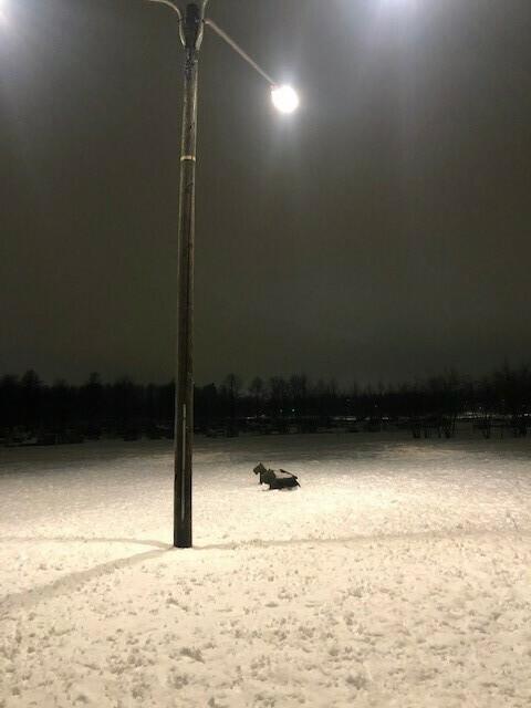 Kartanonhaan koirapuiston laajennus/eriytys pienille ja isoille koirille!