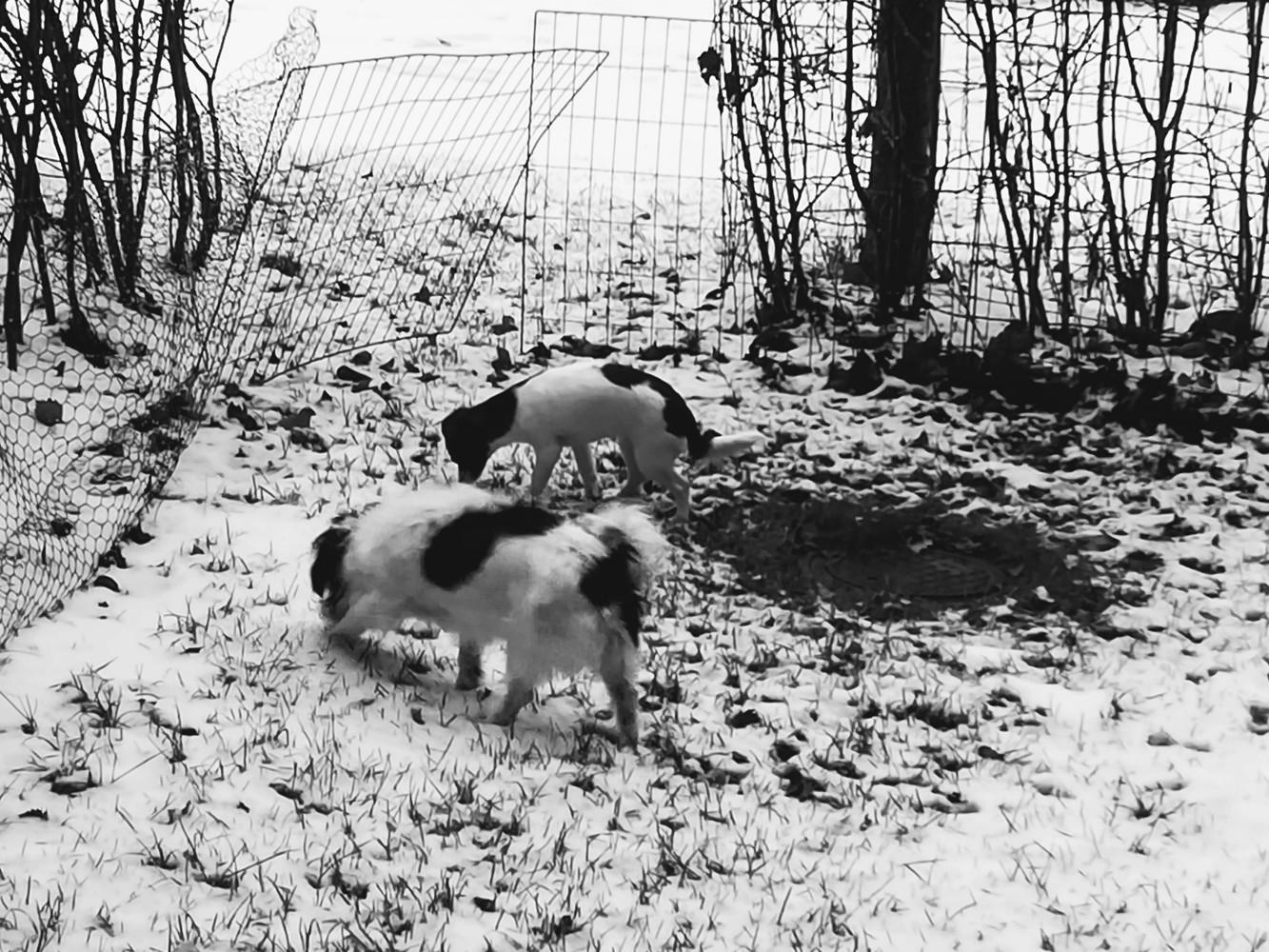 Agility-koiraharrastusvälineitä ja tai puistoja