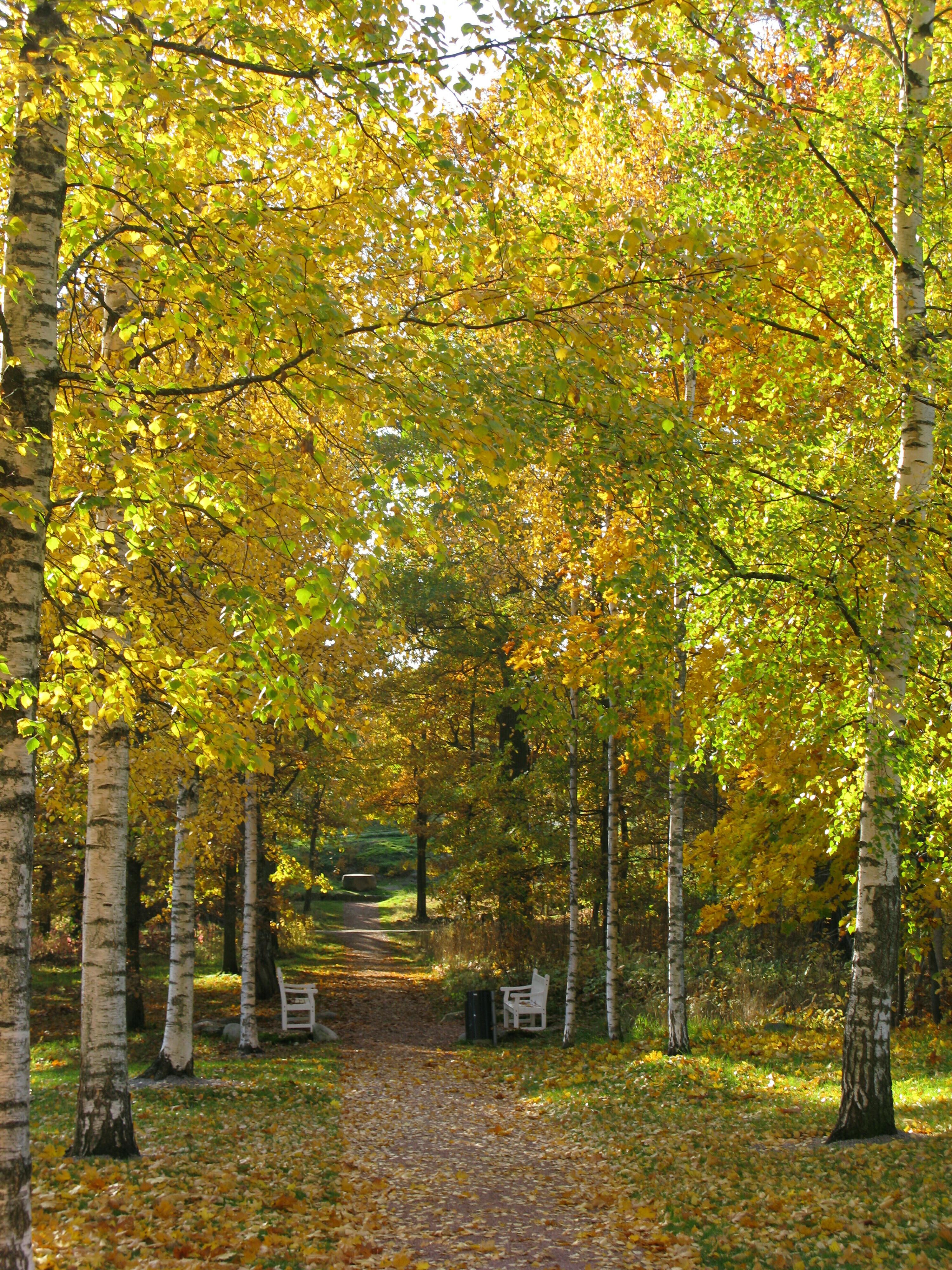Luontoelämyspolku Annalan tammimetsään, jossa hyödynnetään hienovaraisesti olemassa olevia polkuja rakentamalla elämyspaikkoja kaikenikäisille.isille