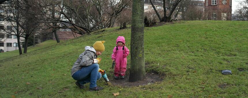 Koffin puistoon perennoja ja kukkasipuleita