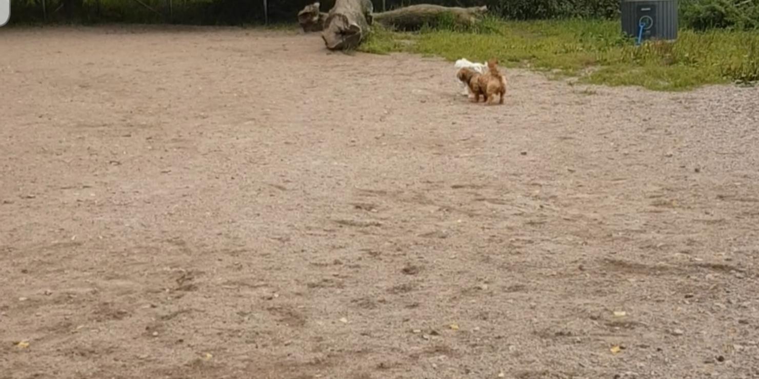 Taivallahden koirapuisto