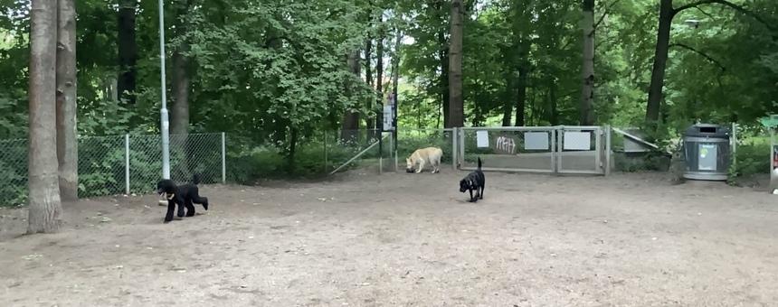Kumpulanlaakson koirapuiston kunnostus