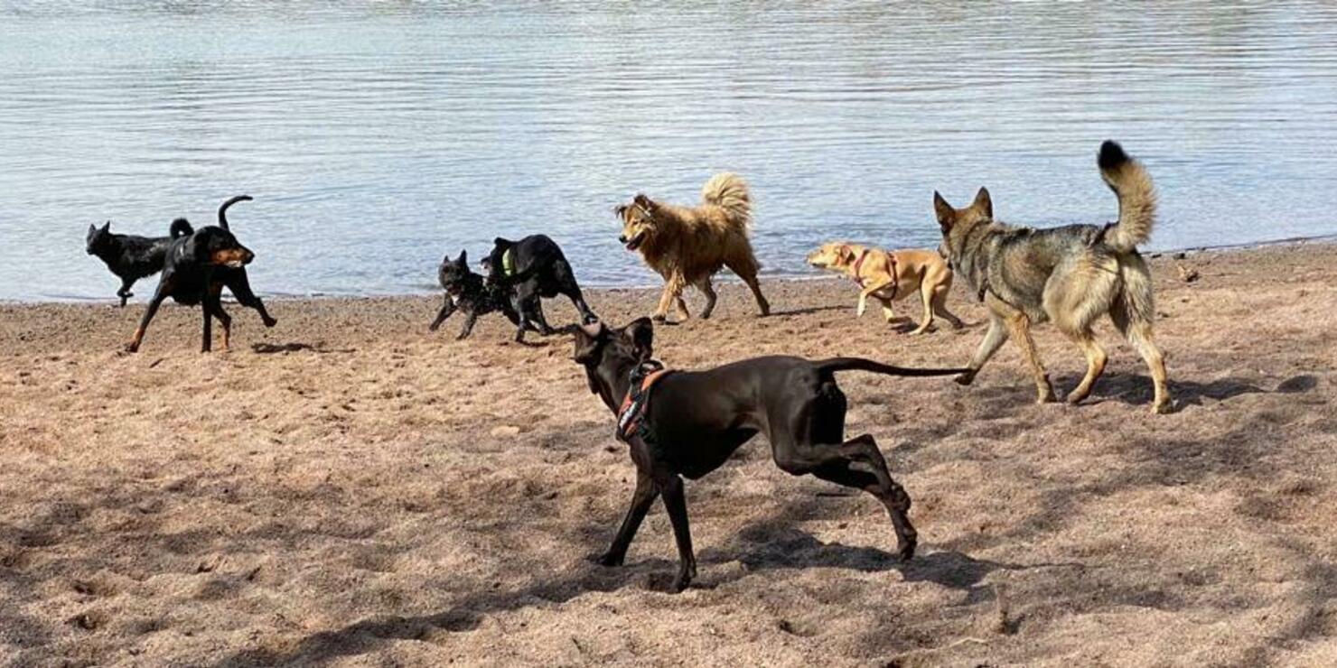 Rajasaaressa koirien on helppo temmeltää