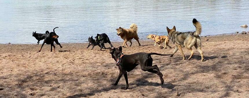 Rajasaaren koirapuisto turvalliseksi liikkua