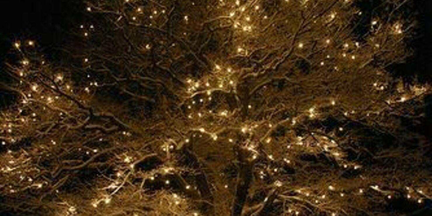 Valoja puihin