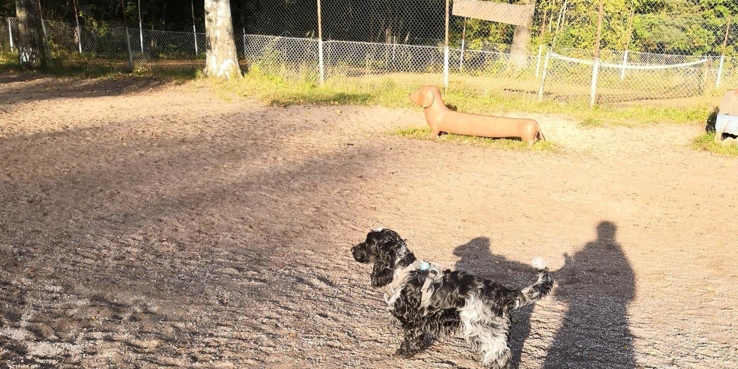Koirapuistot kuntoon